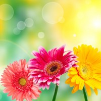 Flowers-Wallpapers